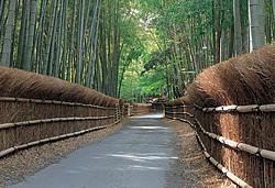 hamkyu-walk-muko